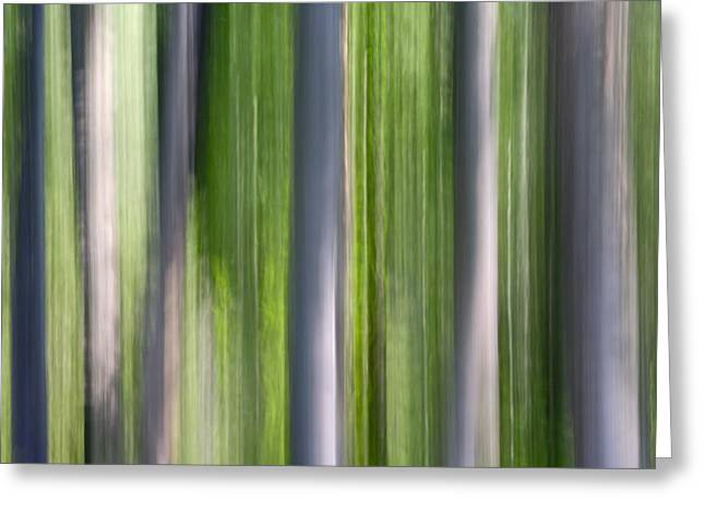 Nature Abstracts Greeting Cards - Abstract Photo Of Birch Trees, Alaska Greeting Card by Mark Stadsklev
