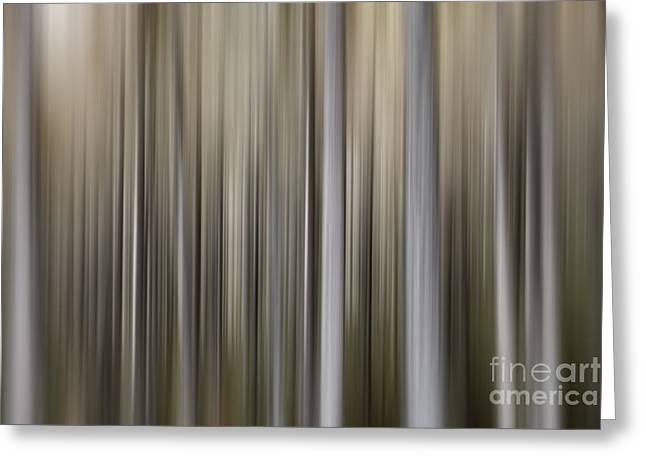 Subtle Greeting Cards - Abstract Pine Forest Greeting Card by Rod McLean