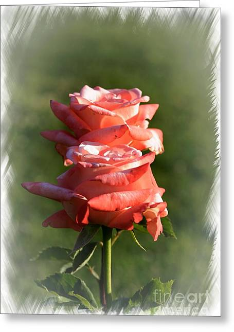 Roses In Bud Greeting Cards - Abstract Roses Greeting Card by Stefano Senise