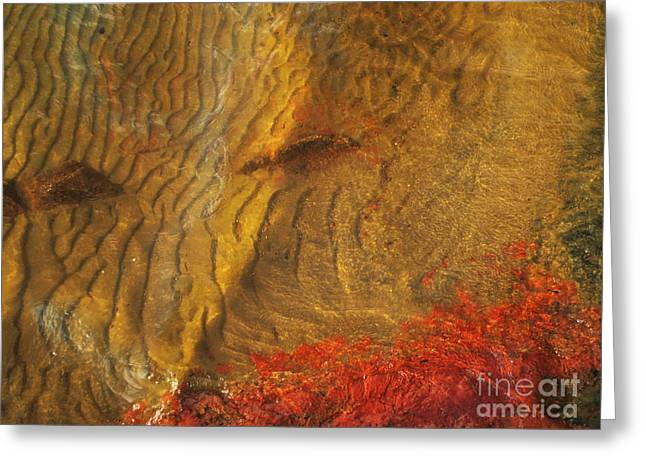 Jonathan Welch Greeting Cards - Abstract Shore 2 Greeting Card by Jonathan Welch