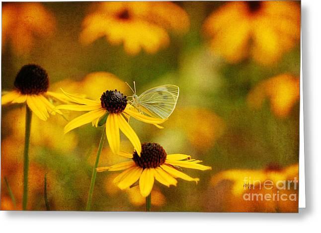 Abundance Greeting Card by Lois Bryan