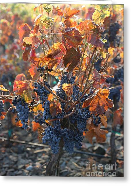 Abundant Harvest Greeting Card by Carol Groenen