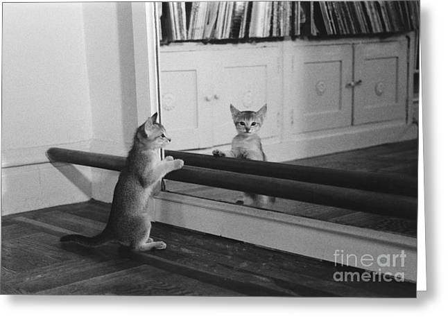 Dance Studio Greeting Cards - Abyssinian Kitten In Dance Studio Greeting Card by Joan Baron