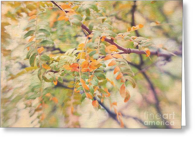 Wattle Greeting Cards - Acacia in Warm Colors Greeting Card by Irina Wardas
