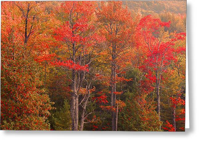 Acadia Fall Colors Greeting Card by Stephen  Vecchiotti