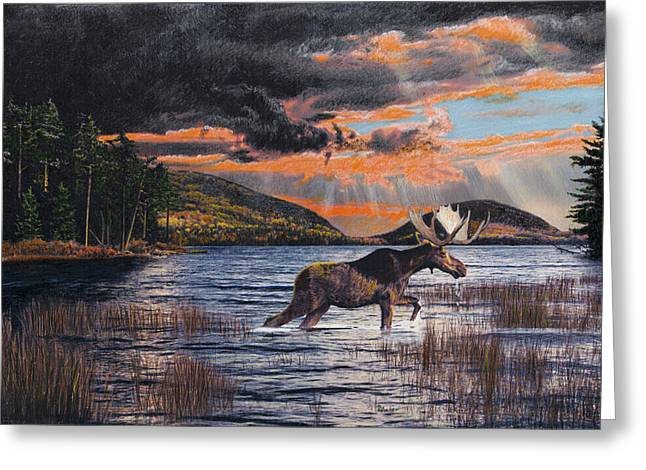 Acadia Feast Greeting Card by Brent Ander