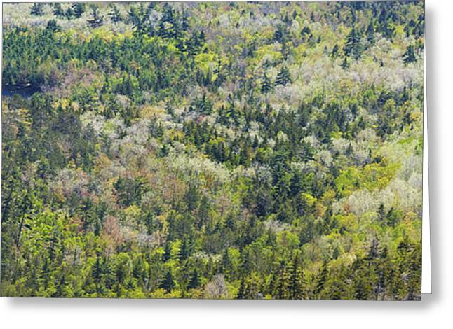 Maine Spring Greeting Cards - Acadia National Park - Mont Desert Island - Spring Forest - Maine Greeting Card by Keith Webber Jr