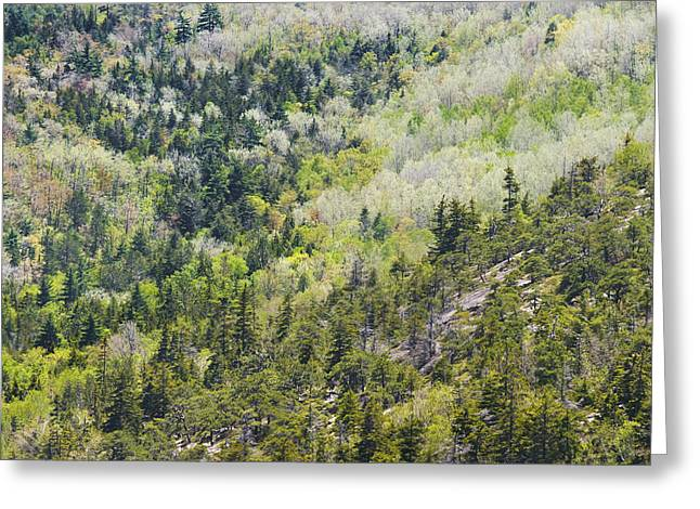 Maine Spring Greeting Cards - Acadia National Park - Mount Desert Island - Forest in Spring Greeting Card by Keith Webber Jr