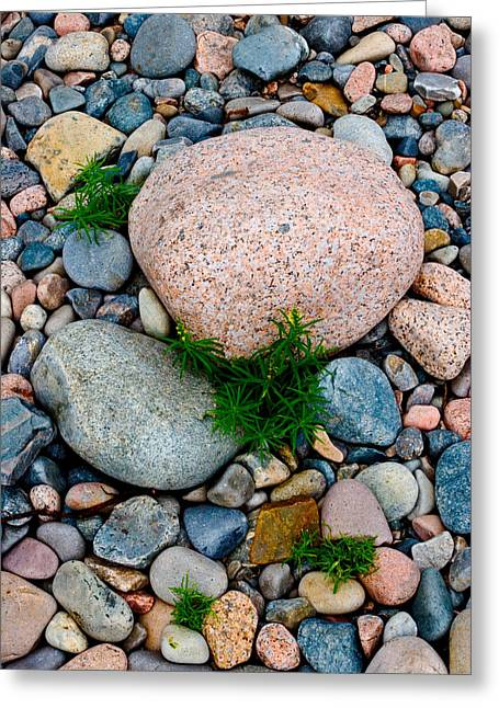 Acadia Rocks 5506 Greeting Card by Brent L Ander
