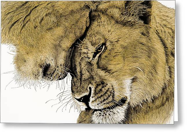 Reserve Drawings Greeting Cards - Acceptance Greeting Card by Sherri Vanschaick