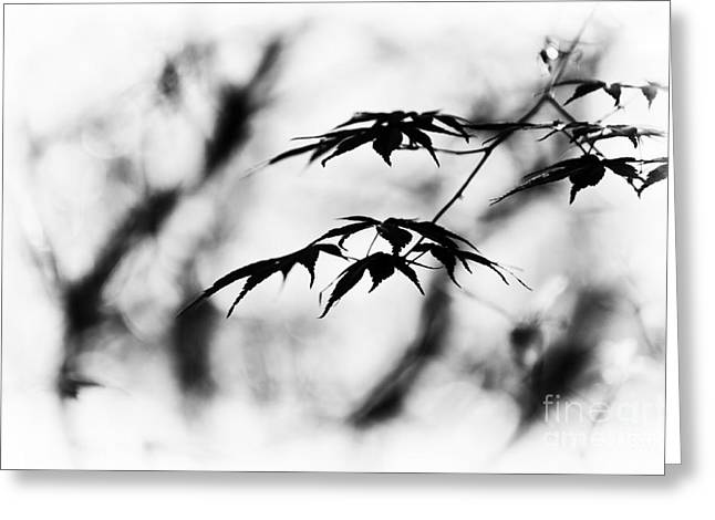 Burgundy Greeting Cards - Acer Burgundy Lace Monochrome Greeting Card by Tim Gainey