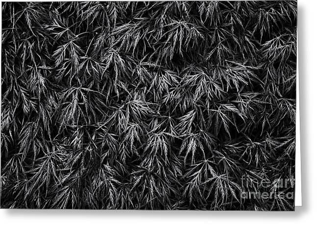 Garnet Greeting Cards - Acer Dissectum Garnet Monochrome Greeting Card by Tim Gainey