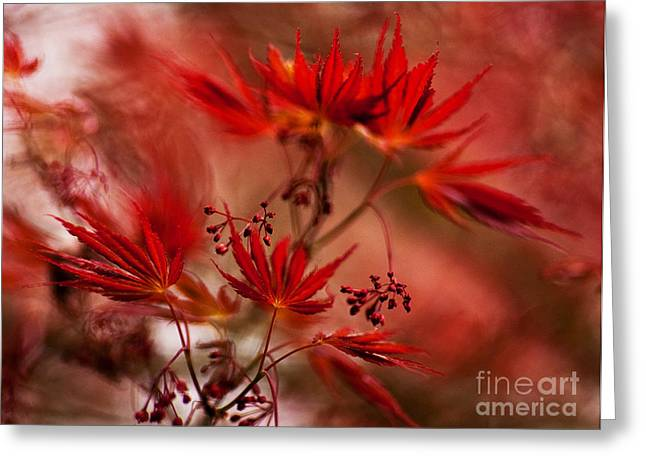 Acer Storm Greeting Card by Mike Reid