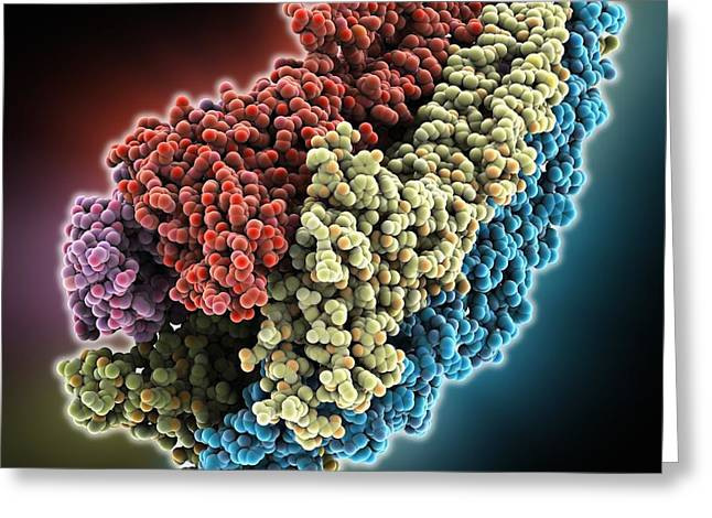 Acetylcholine receptor molecule Greeting Card by Science Photo Library