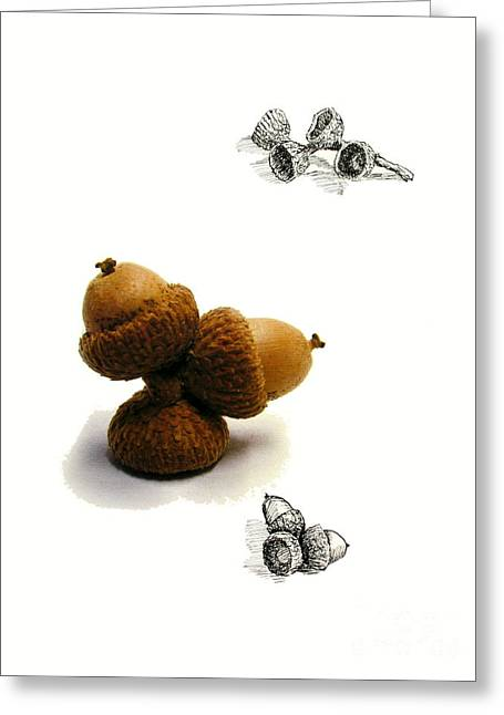 Pen And Ink Drawing Mixed Media Greeting Cards - Acorns  Greeting Card by Adam Long