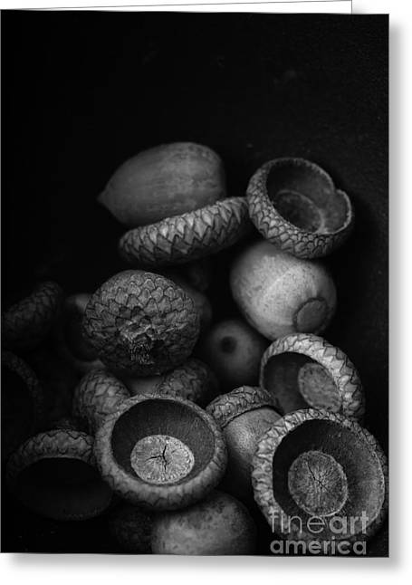 Acorns Black And White Greeting Card by Edward Fielding