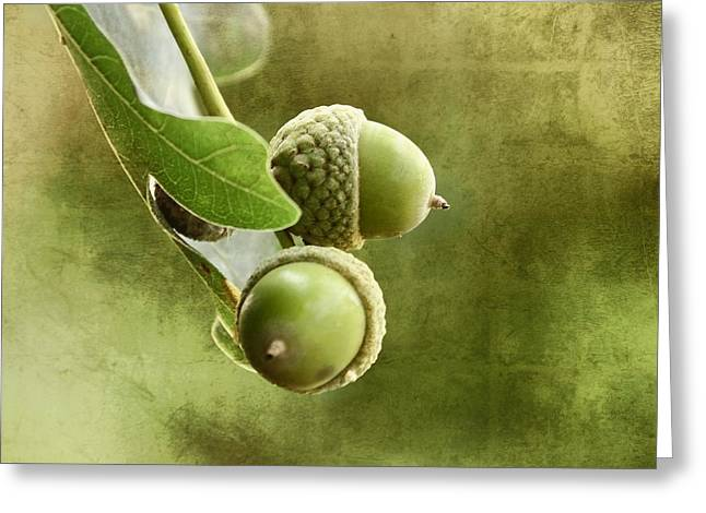 Nuts Mixed Media Greeting Cards - Acorns Greeting Card by Gynt