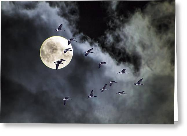 Flock Of Geese Greeting Cards - Across a Harvest Moon Greeting Card by Randall Nyhof