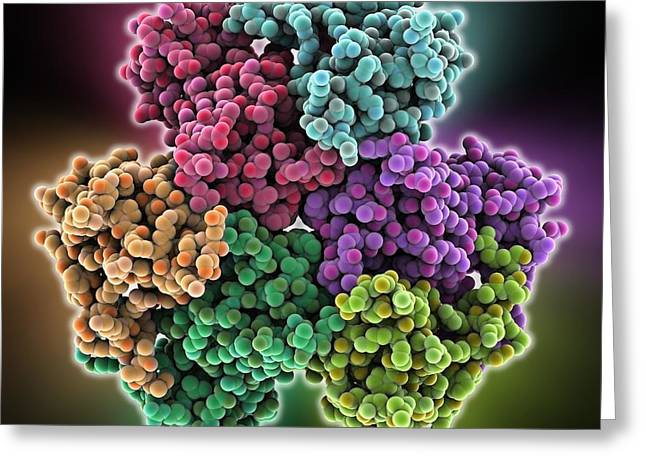 Coa Greeting Cards - Acyl-CoA hydrolase enzyme Greeting Card by Science Photo Library