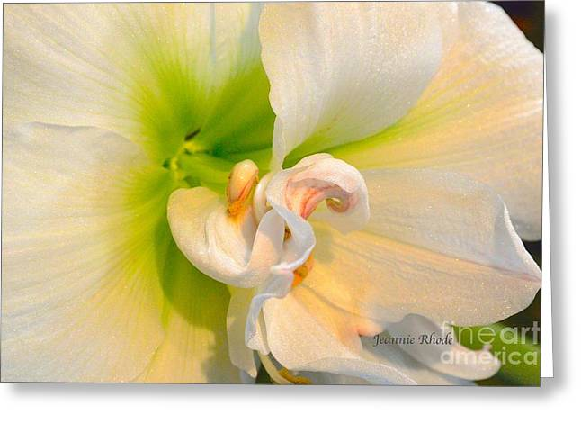 Bouquet Amaryllis Greeting Cards - Angle Dust Greeting Card by Jeannie Rhode Photography