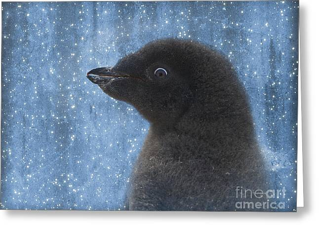 Surprise Greeting Cards - Adelie Winter Magic... Greeting Card by Nina Stavlund