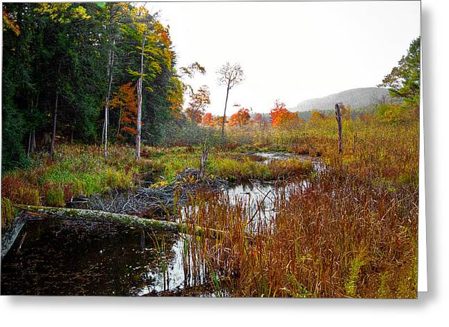 Fir Trees Greeting Cards - Adirondack Pond IV Greeting Card by David Patterson