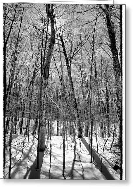 Snowy Field Greeting Cards - Adirondack Shadows II Greeting Card by David Patterson