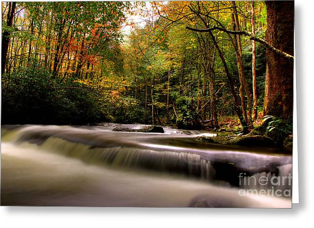 Flowing Stream Greeting Cards - Admiring The Season Greeting Card by Michael Eingle