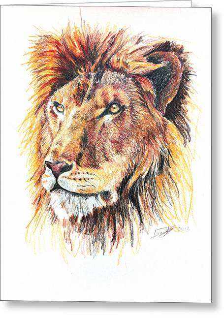 Marcin Greeting Cards - Adolescent Lion Greeting Card by Marcin and Dawid Witukiewicz