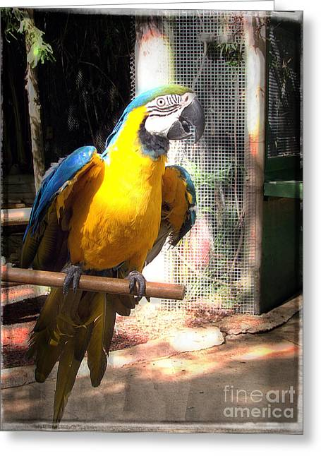 Adopted Macaw - Rescued Parrot Greeting Card by Ella Kaye Dickey