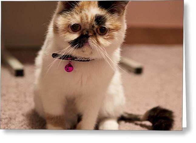 Cute Kitten Pyrography Greeting Cards - Adora Greeting Card by Vieda Djuliarso