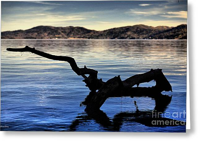 Reflecting Water Greeting Cards - Adrift Reflection Greeting Card by Cheryl Young
