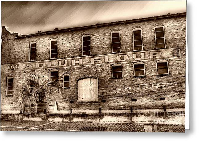 Scenic Tours Greeting Cards - Adulh Flour  Greeting Card by Skip Willits