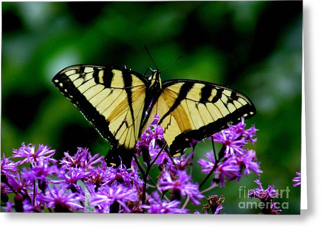 Best Seller Greeting Cards - Aep909a Greeting Card by Scott B Bennett