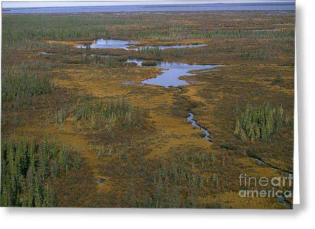 Canadian Wilderness Greeting Cards - Aerial View, Manitoba Greeting Card by Bill Bachmann
