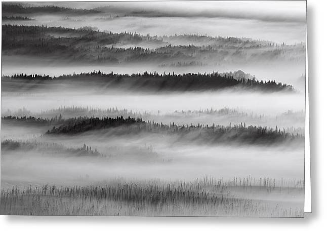 Nature Abstracts Greeting Cards - Aerial View Of Spruce Trees Standing In Greeting Card by Mark Stadsklev