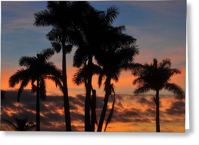 Royal Art Greeting Cards - Palms at dusk Greeting Card by David Lee Thompson