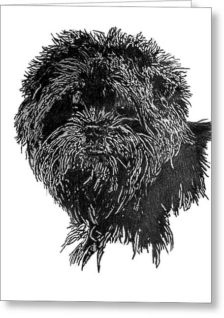 Dogs Jewelry Greeting Cards - Affenpinscher Head Study Greeting Card by Virginia Cleary