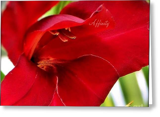 Empowerment Greeting Cards - Affinity Greeting Card by Amy Delaine