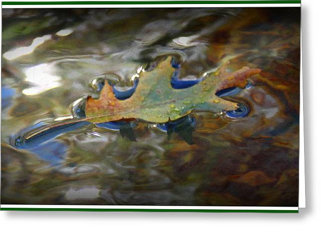 Autumn Leaf On Water Greeting Cards - Afloat Greeting Card by Greg Thiemeyer