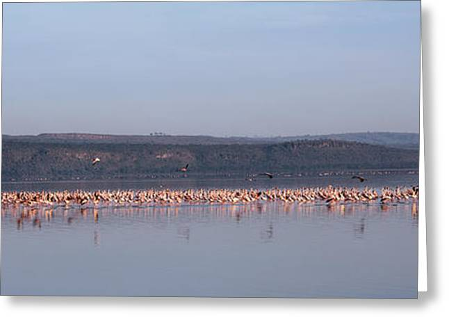 The Hills Greeting Cards - Africa, Kenya, Lake Nakuru National Greeting Card by Panoramic Images
