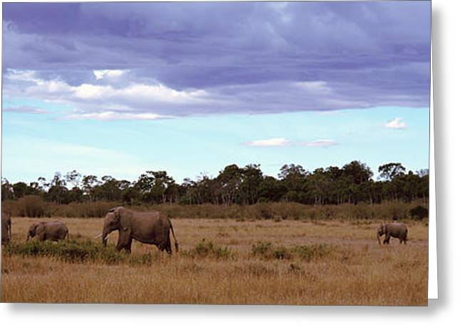 Overcast Day Greeting Cards - Africa, Kenya, Masai Mara National Greeting Card by Panoramic Images