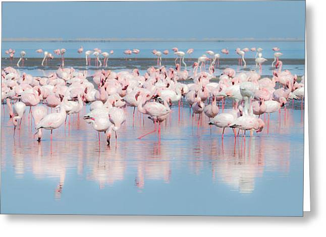 Africa, Namibia, Walvis Bay Greeting Card by Jaynes Gallery
