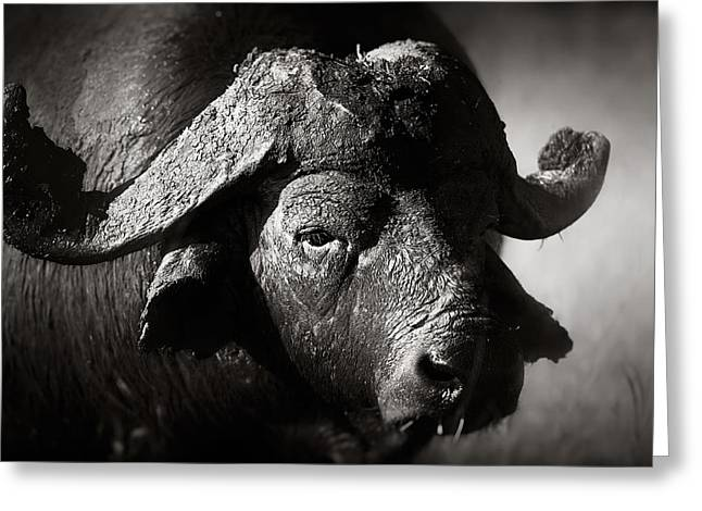 Parks And Wildlife Greeting Cards - African buffalo bull close-up Greeting Card by Johan Swanepoel