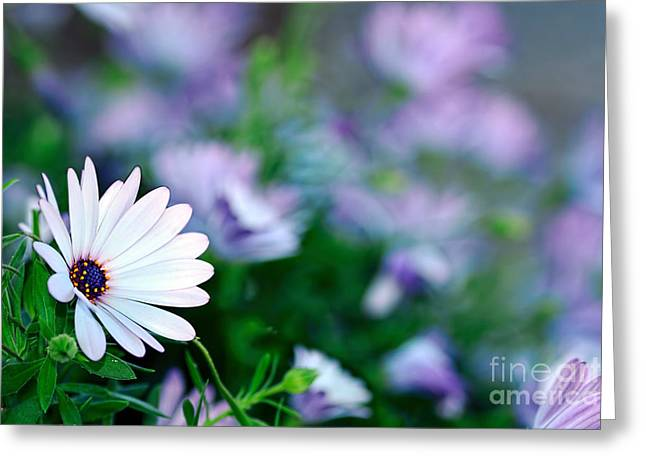 Yellow Stamen Greeting Cards - African Daisy Bokeh by Kaye Menner Greeting Card by Kaye Menner