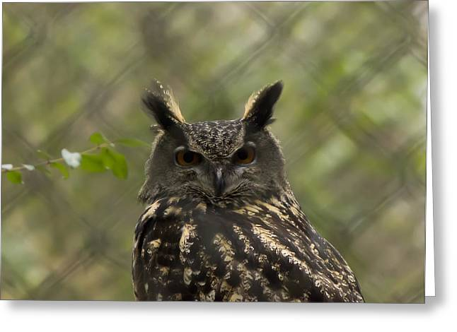 Charlotte Museums Greeting Cards - African Eagle Owl Greeting Card by B Wayne Mullins