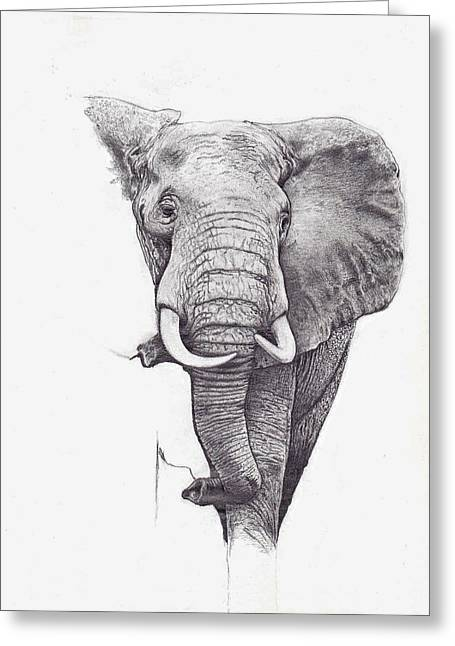 Andrew Harrison Greeting Cards - African Elephant  Greeting Card by Andrew Harrison