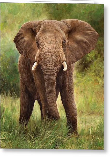 Artist Greeting Cards - African Elephant Greeting Card by David Stribbling