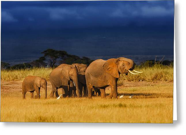 Elephants Pyrography Greeting Cards - African Elephant Herd Greeting Card by Maggy Meyer