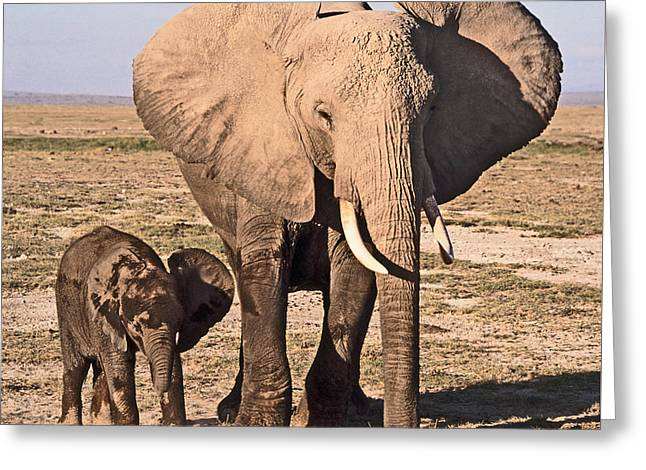 Safari Greeting Cards - African Elephant mother and calf Greeting Card by Liz Leyden